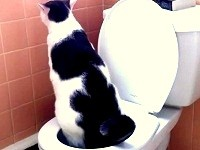 Albus Toilet Trained Cat Step 9