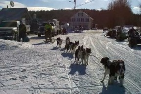 Sled Dog Team