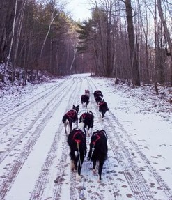 My dogsled team