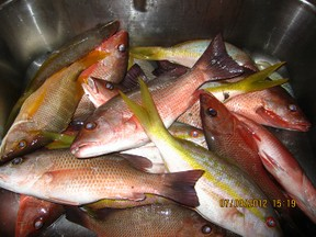 Yellowtail and Mangrove Snappers