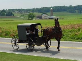 Amish riding in buggy