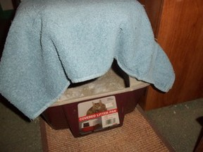 Covering the box can help control the odor.