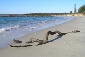 piece of driftwood on a beach