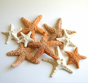 edible starfish