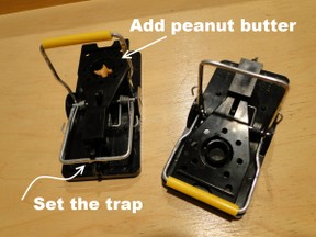 setting mouse traps