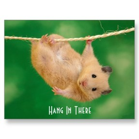 golden hamster care hanging hamster
