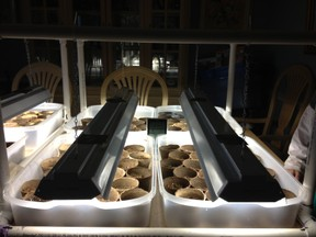 Homemade seed germination grow light
