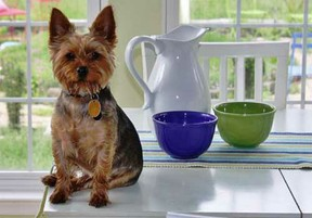 Small dog photographed on kitchen counter