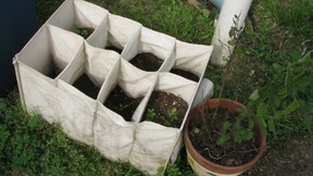 shoe bag planter