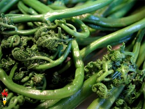 Fiddlehead Recipe