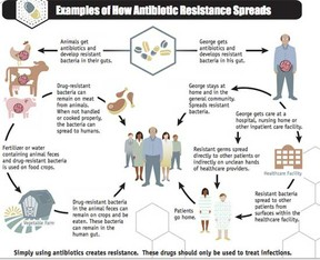 antibiotic resistance spreads