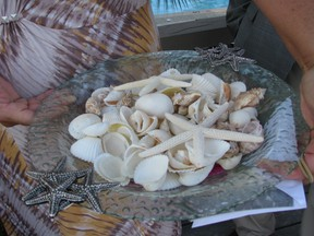 seashells in a bowl