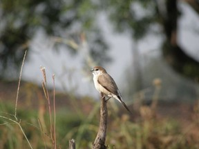 Indian Silver Bill