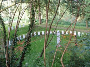 A peaceful spot in Saint Symphorien Cemetery