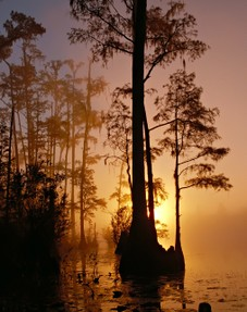 Florida Swamp Sunset
