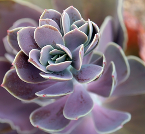 colors of succulents