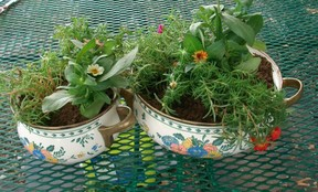 Add flowers to your pot planters