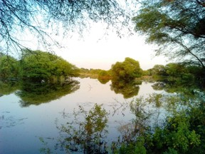 Wetland at Bharatpur