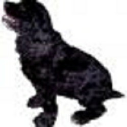 blackspanielgallery